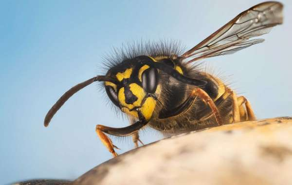 How to Avoid Wasps When Spending Time Outside?