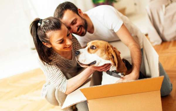 What the steps to take while moving with pets?