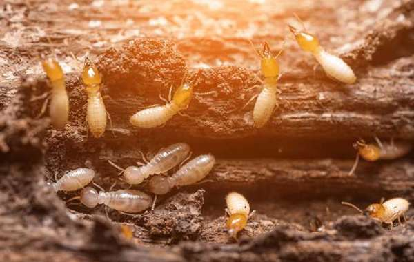 The Cost of Termite Control in Gurgaon